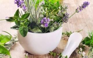 Травы от перхоти: как сделать отвар из крапивы, ромашки, алоэ, чистотела, корня лопуха, какая трава лучше всего помогает от перхоти